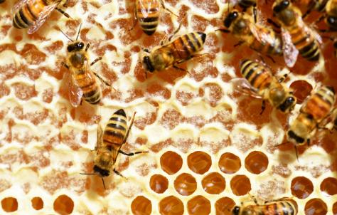 O sekretach produktów pszczelich i apiterapii